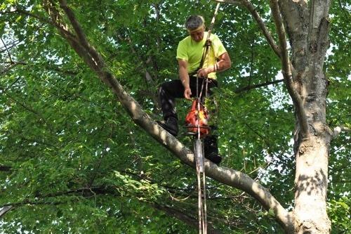 Arborist - Massachusetts Arborist, Tree Removal ...
