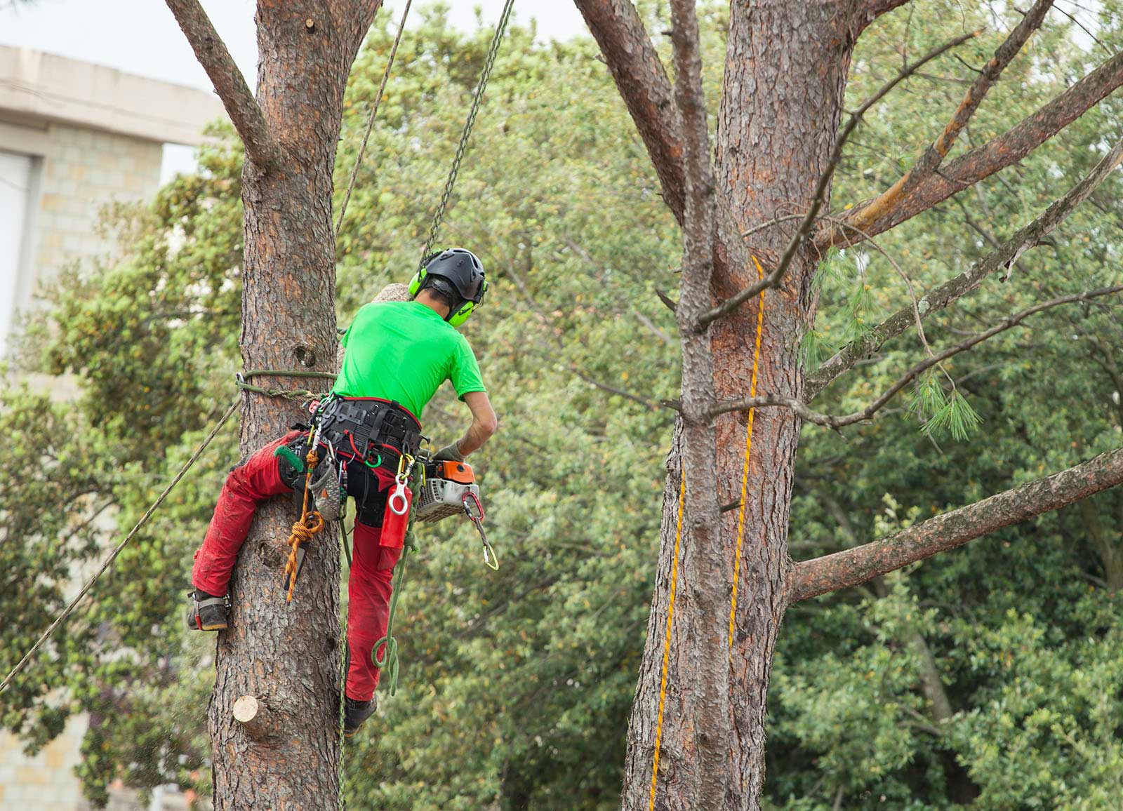 Tree Removal Services | BR Tree Services