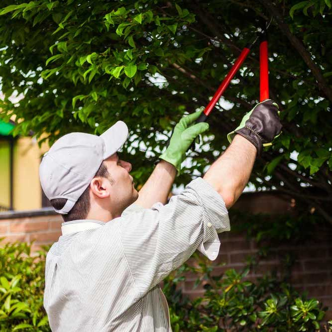 Tree Pruning & Maintenance | B&R Tree Service