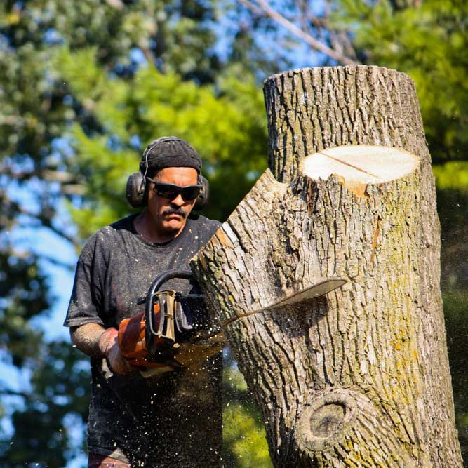 Tree Removal Services | B&R Tree Service